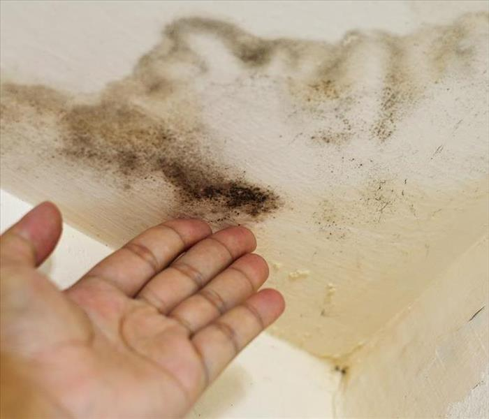 Mold Remediation How To Keep Mold Growth at Bay After Residential Flooding